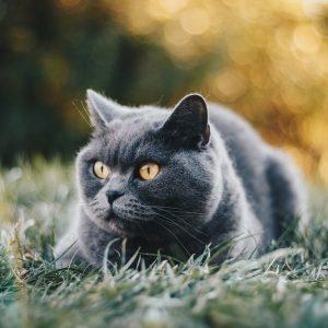 Hranitoare, Adapatori si Castroane Pisici